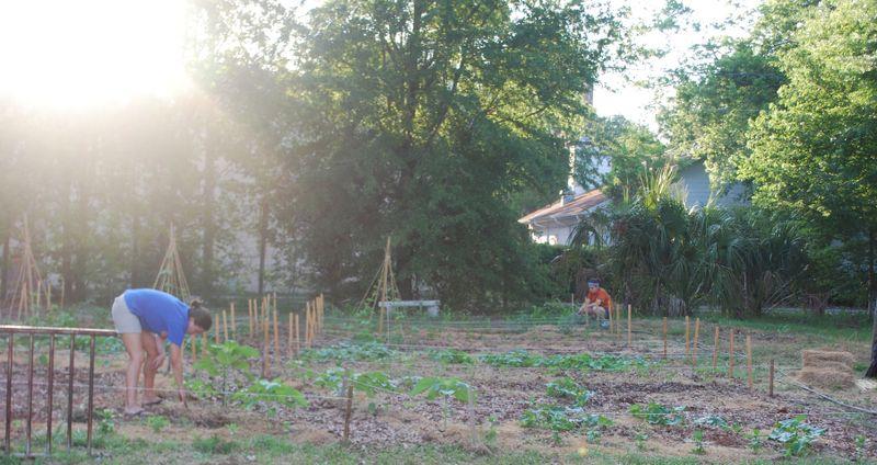 Garden week 5