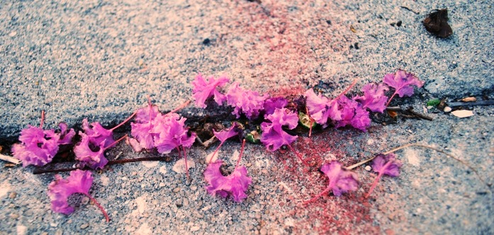 Sidewalk blossoms 2