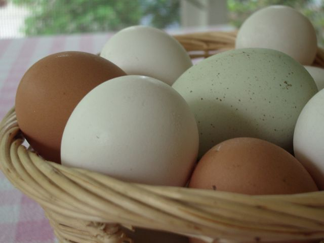 All_our_eggs_in_a_basket